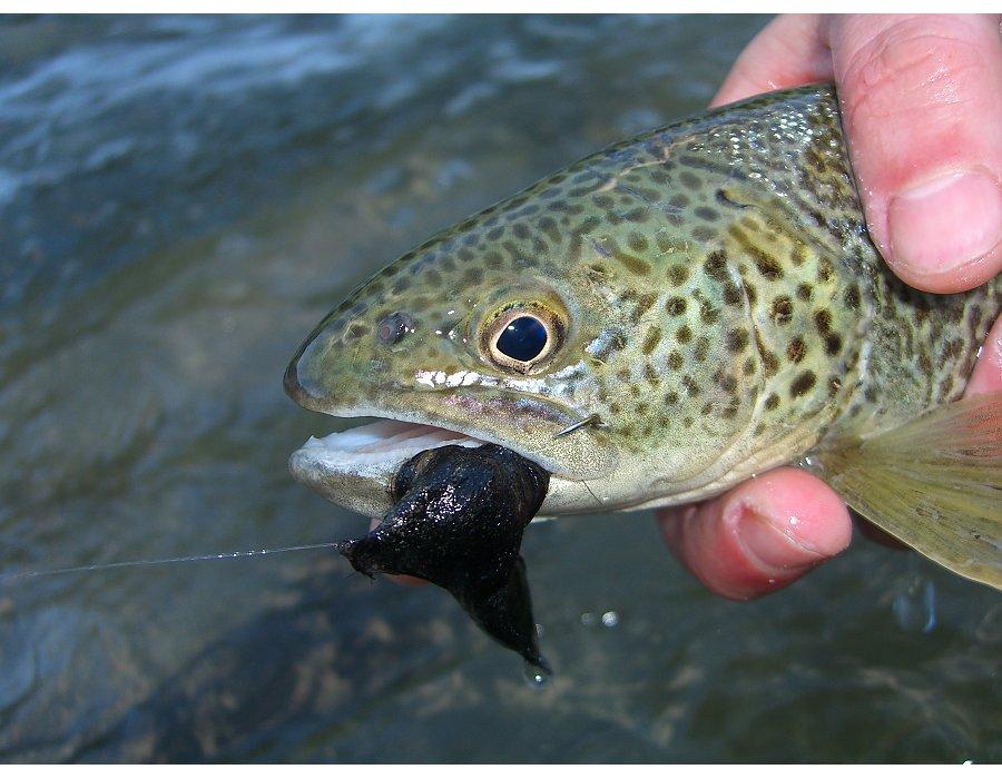 fische adria übersicht