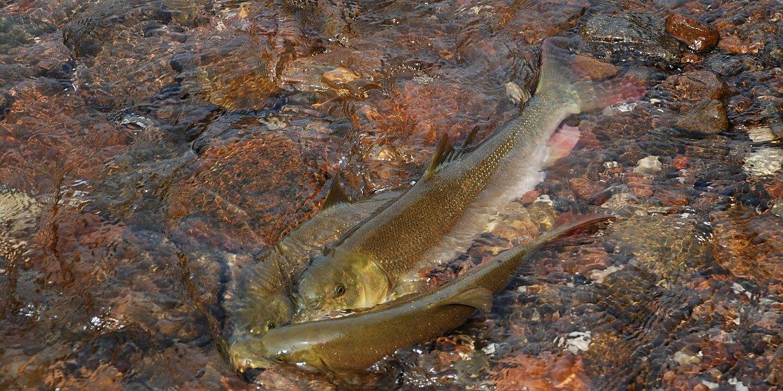 FischWissen - Fish First - Fische und Gewässerschutz in Südtirol